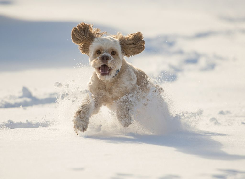 Dog-running-in-snow