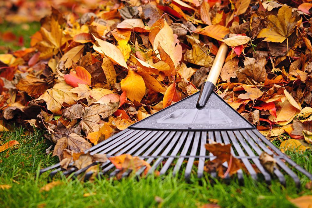 ptg-fall-services-1