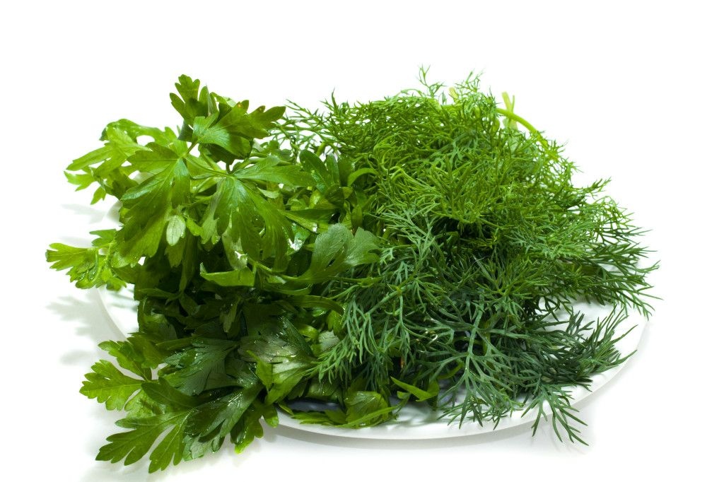 Parsley and fennel on a plate over white background