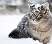 кот-в-снегу-4