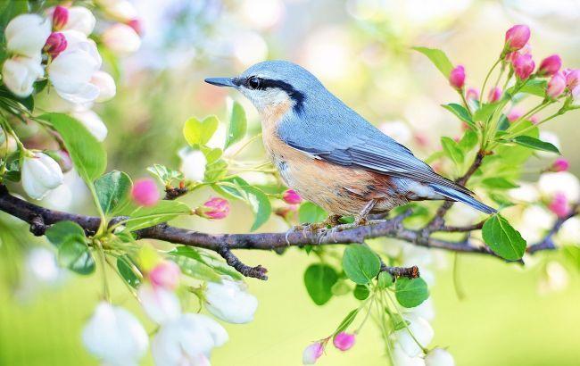 spring_bird_2295431_1920_650x410