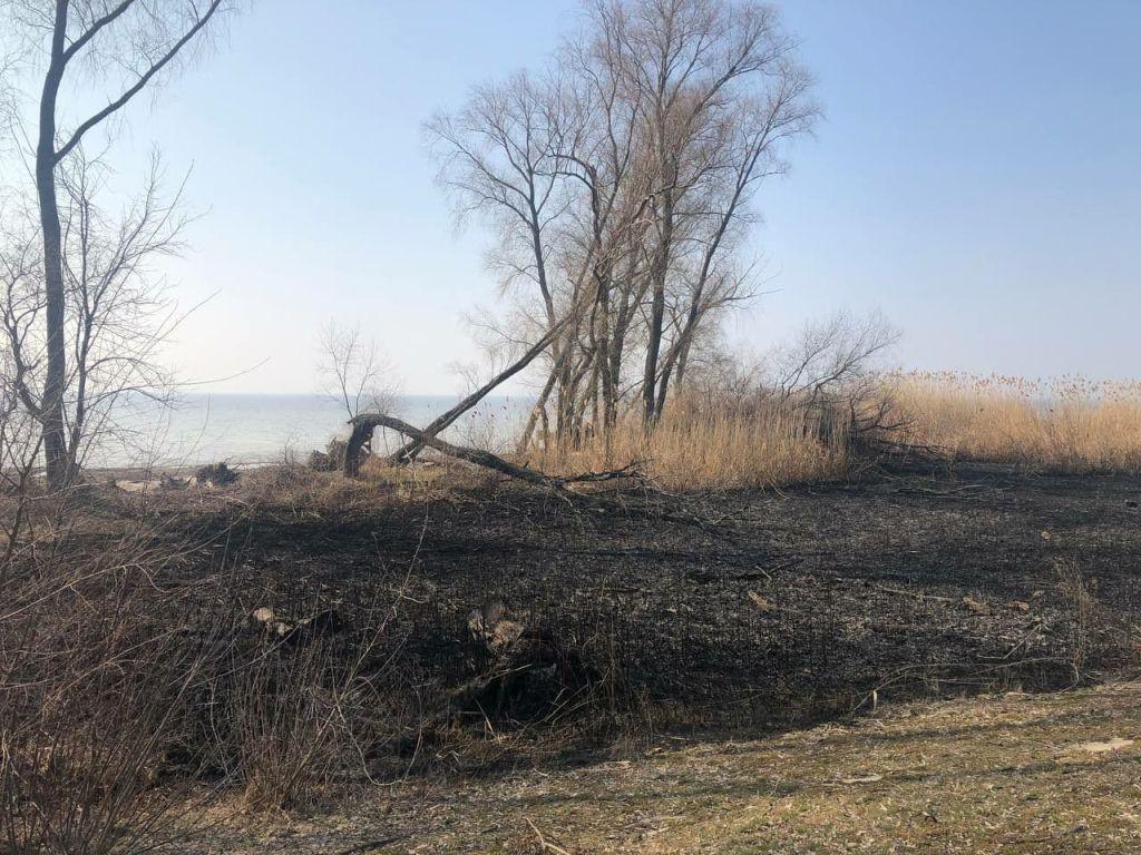 Весною під керуванням Лєдніка були випалні й розорані великі території на березі Кременчуцького водосховища